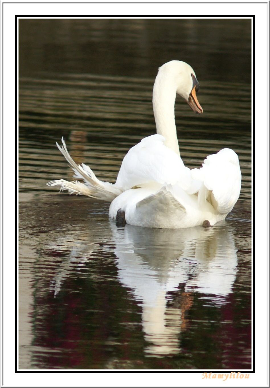 http://a6.idata.over-blog.com/3/17/45/90/Photos---coucou-du-haiku/Le-cygne.jpg