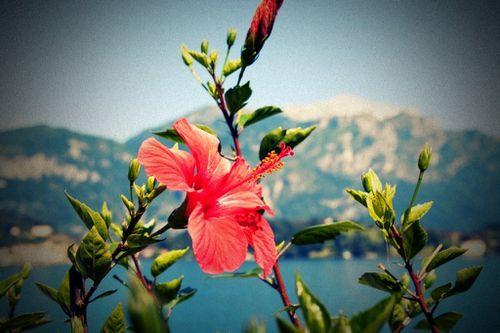 Le changement climatique fait perdre de l'altitude aux plantes
